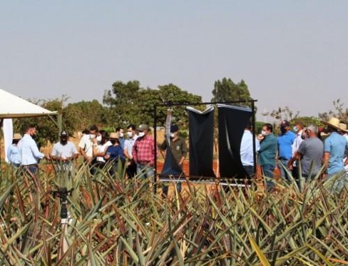 MT Horticultura realizou Dia de Campo do Abacaxizeiro na Unemat