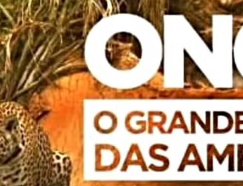 Professora da Unemat é Entrevistada para Documentário sobre Onças