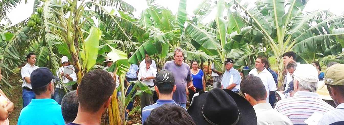 Dia de campo da cultura da banana é realizado na Unemat de Tangará da Serra