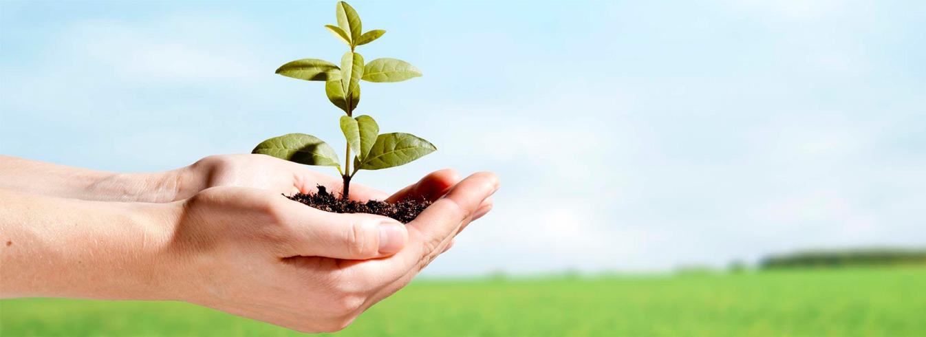 Inscrições Abertas para Mestrado em Ambiente e Sistemas de Produção Agrícola