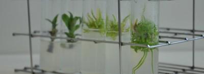 planta-profbio