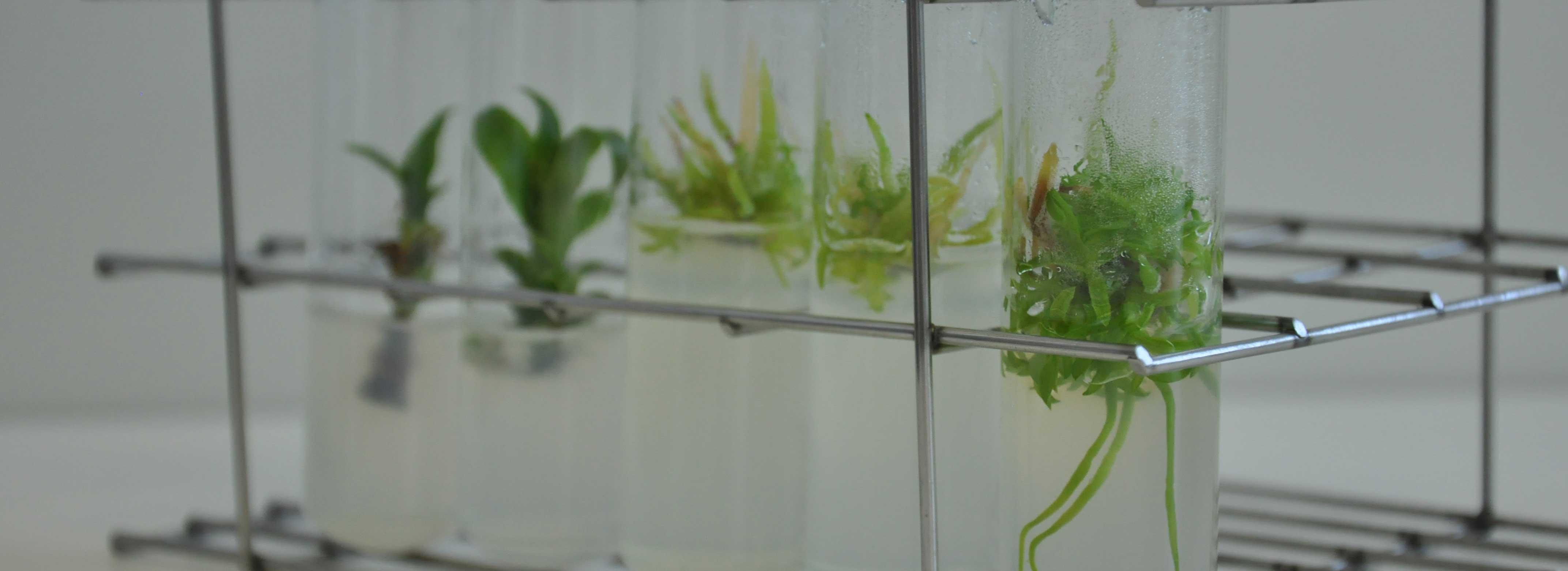 Câmpus de Tangará oferecerá Mestrado Profissional em Ensino de Biologia em 2017